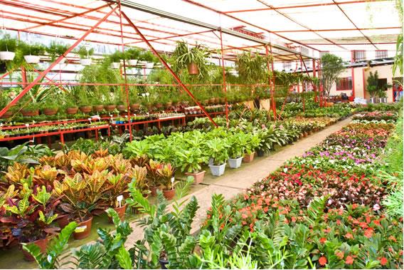 Resultado de imagem para floricultura
