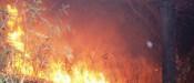 vegetação incendio 2